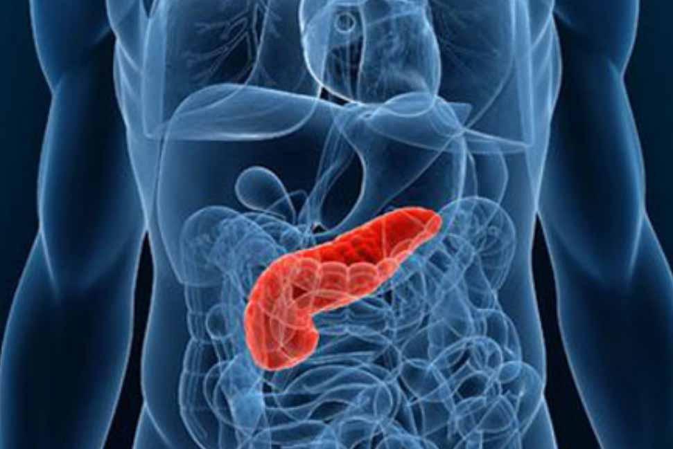 disegno 3D pancreas sito web Giancarlo Stazi